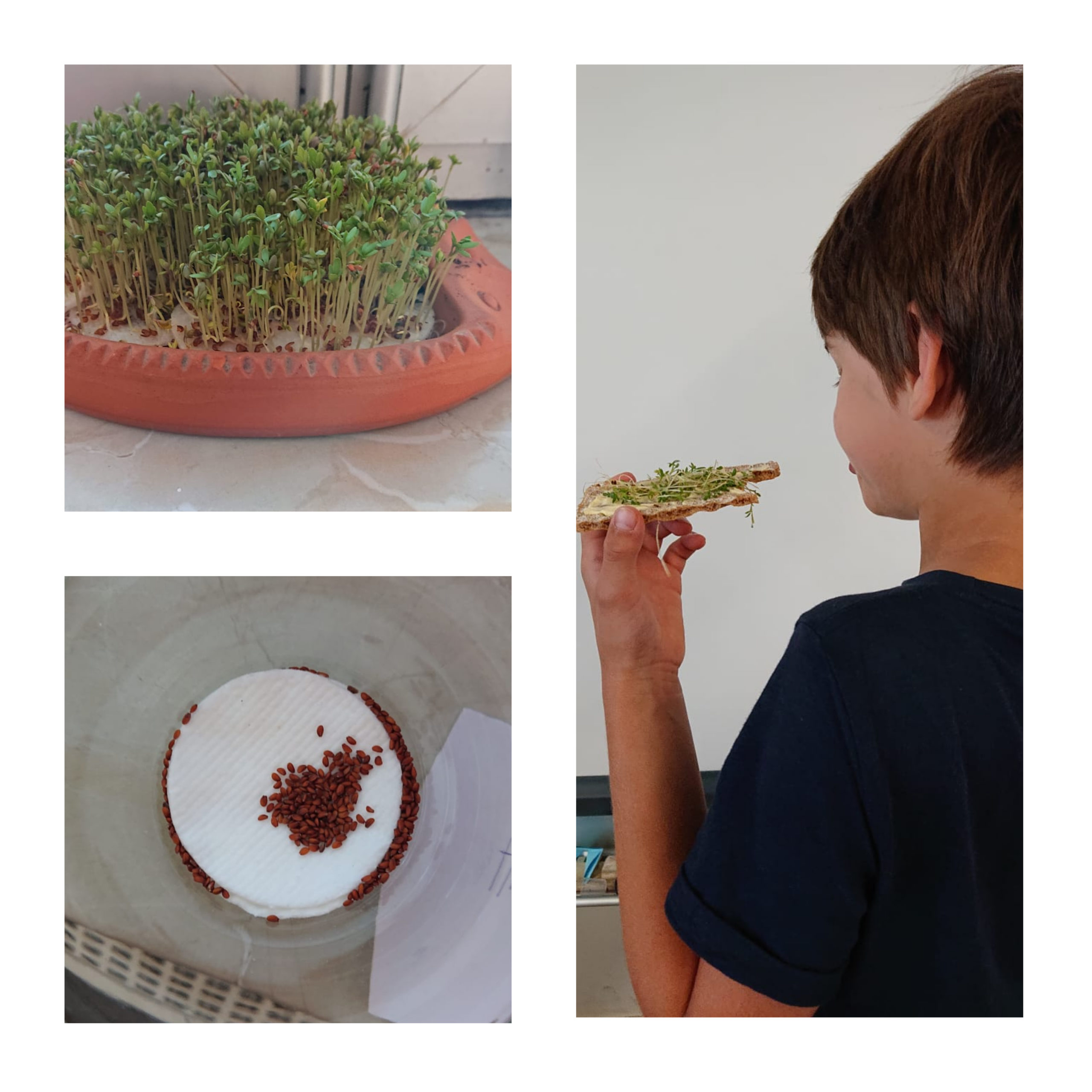 Kresse säen, ernten und essen